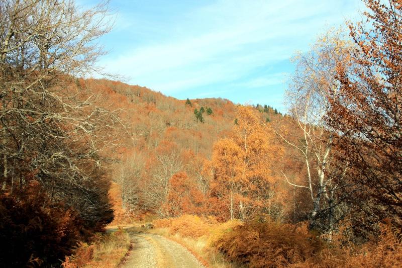 Les couleurs de l'automne... Img_4049