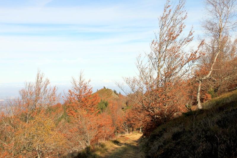 Les couleurs de l'automne... Img_4110