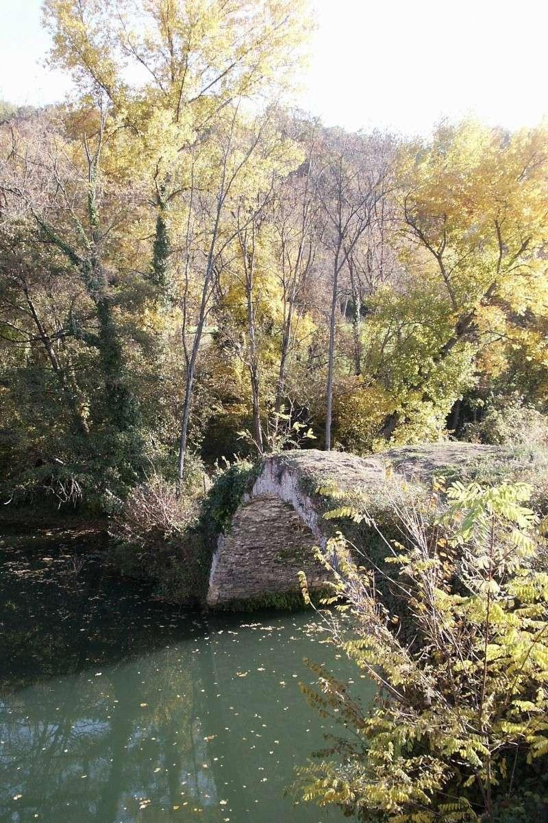 Les couleurs de l'automne... Pict0011