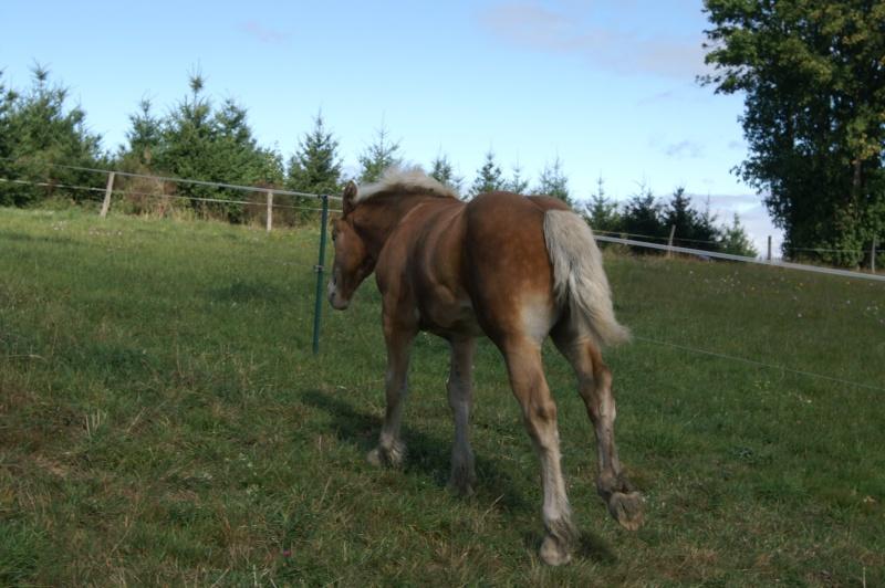 "Concours : ""cheval au galop"" GAGNANTE : TItâne Pict0099"