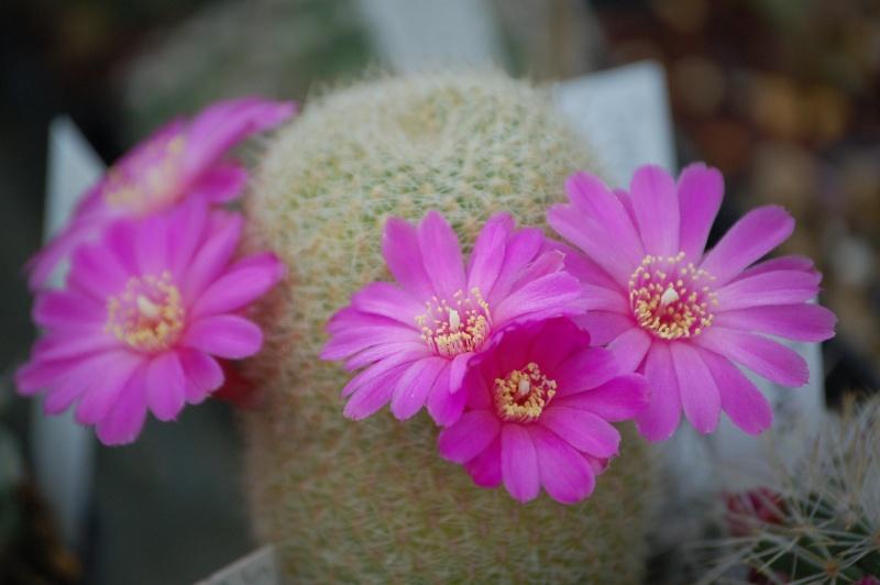 Vive les fleurs! Dsc_0052