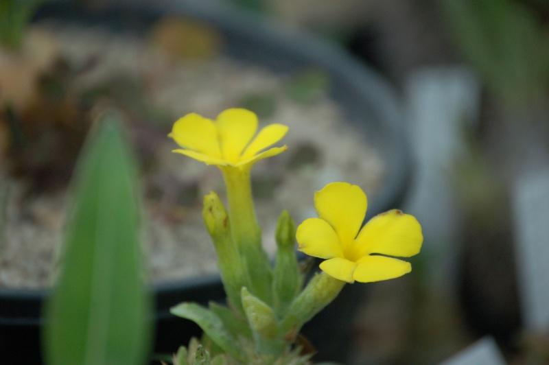 Vive les fleurs! Dsc_0056