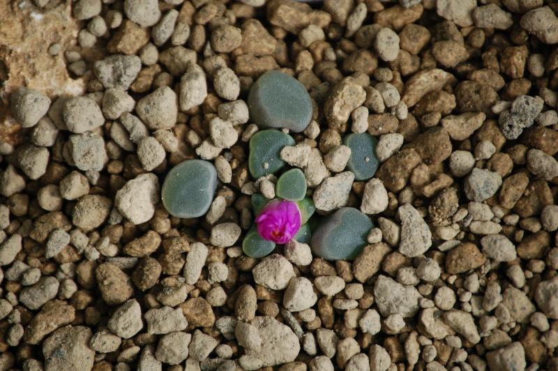 Vive les fleurs! Dsc_0063