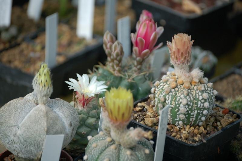 Vive les fleurs! Dsc_0066