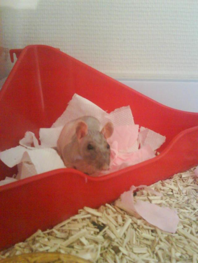 Alphonse X Pupuce (rats nus) Dsc00721