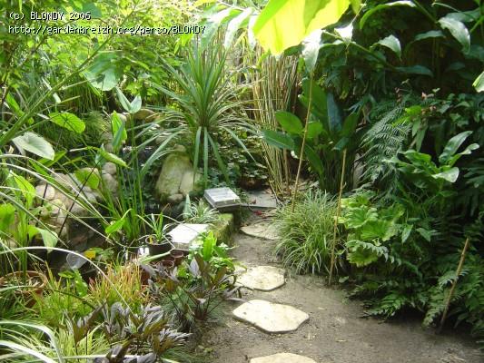 mon tout petit patio Patio_12
