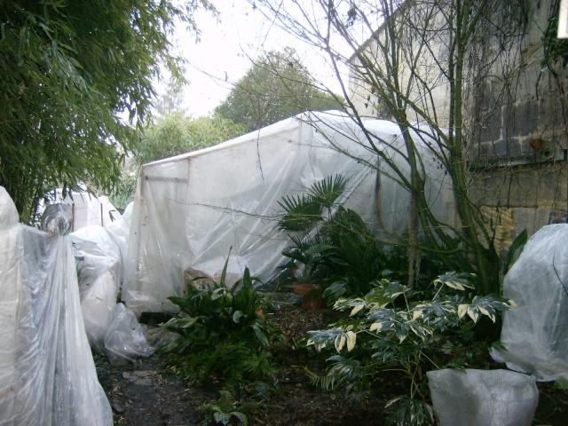 Protections hivernales ou jardin fantomatique Photo140