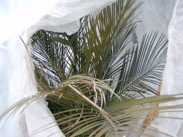 Bilan hiver 2011/2012 : les plantes  après cette vague de froid Photo_71