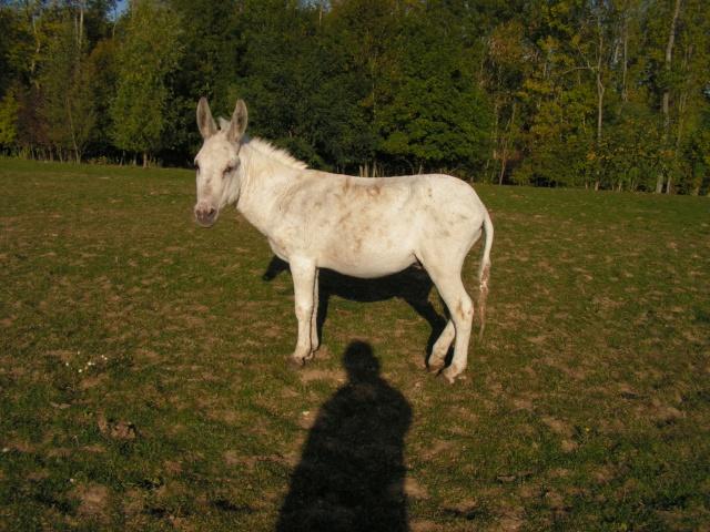 (77) Blanchot petit ane 10/12 ans [Lucayan] Pict0110