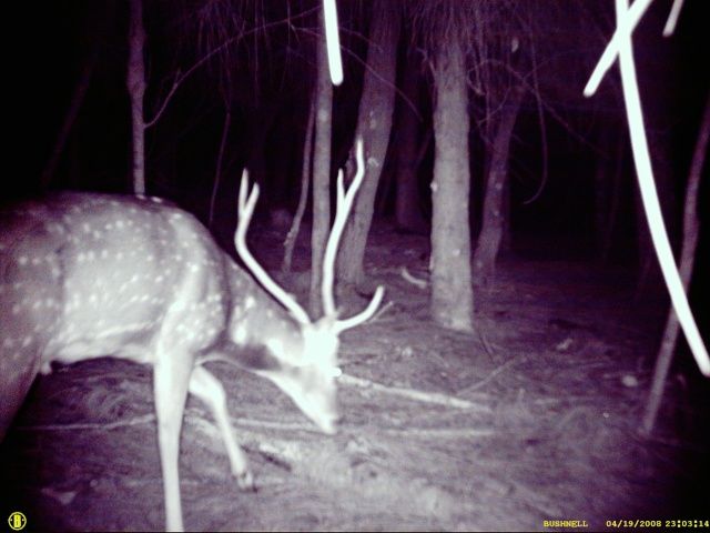 BOWHUNTING PIC GALLERY.......... - Page 3 Deer_c11