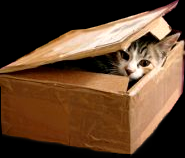 Le carton du petit chat mignon Car11