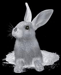 Le terrier du lapin marrant Lap11