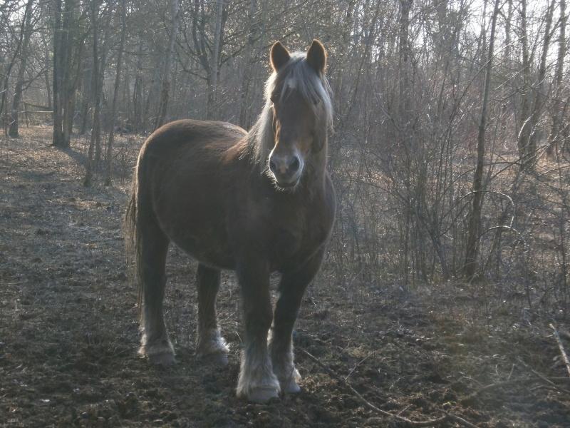 FANY - Trait Breton née en 1993 - Adoptée en juin 2011 par fluo P2040113