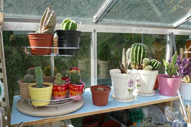 quelques photos de mes cactus Cactus11