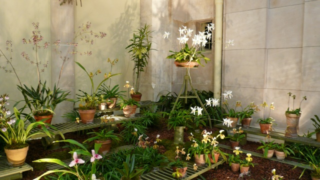 EXPO : fACULTE DES SCIENCES DE PHARMACIE DE PARIS 2008 P1000321