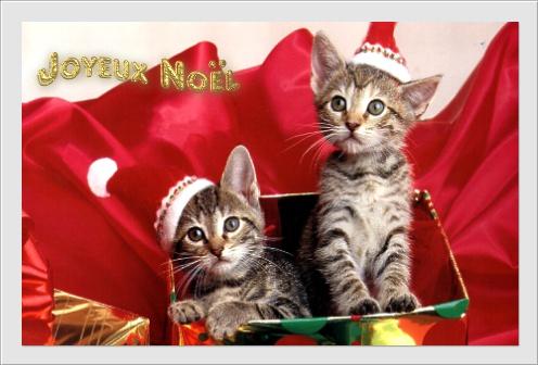 Joyeux Noel  Chat11