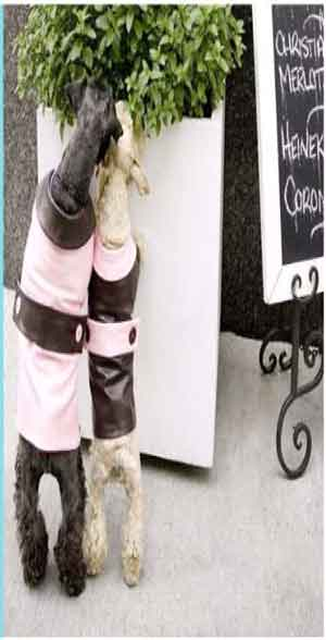 Dog Cloths Sizing Newclo10