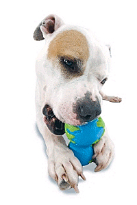 How to select right dog toy for your dog! Orbee-12