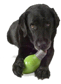 have a Treat Toy to test dog IQ, independencet and how intellgence of him. Orbee-16