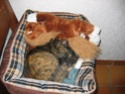 Mon chat Antoine. Img_0010