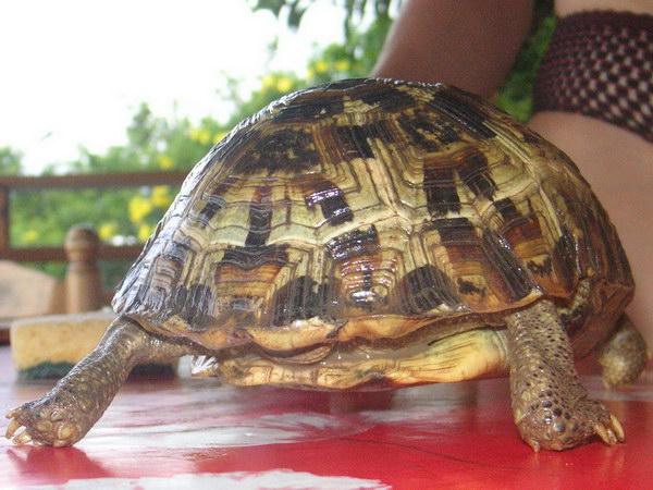 Trouvée à Mayotte Ident_10