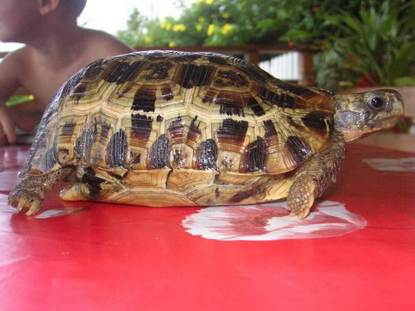 Trouvée à Mayotte Ident_12