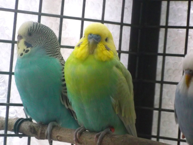 Besoin d'aide pour Mutations (photos 28/11) Dscf1413