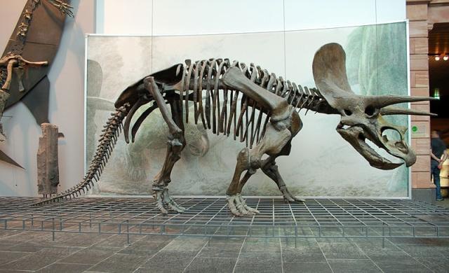Le tricératops 800px-30