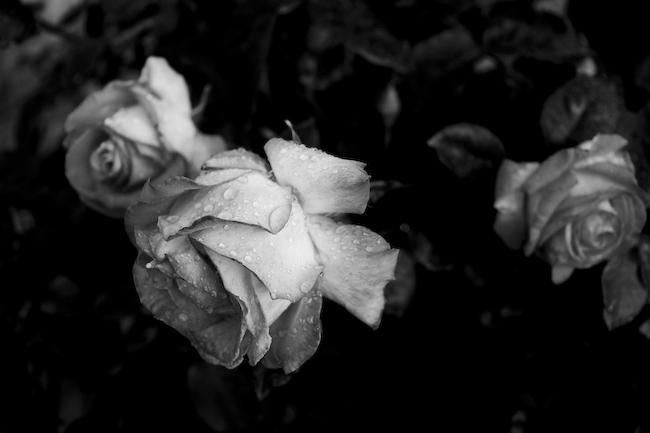 La Fleur Qui Pleure