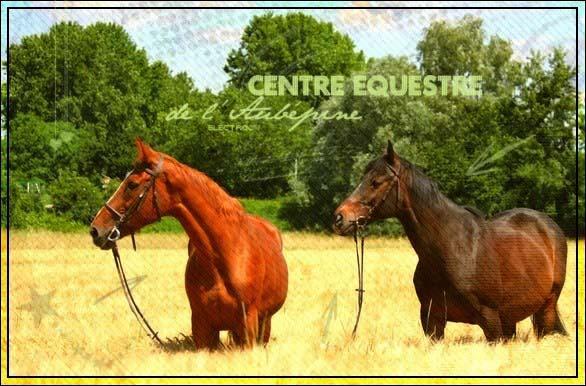 ♥ Centre Equestre de l'Aubépine ♥