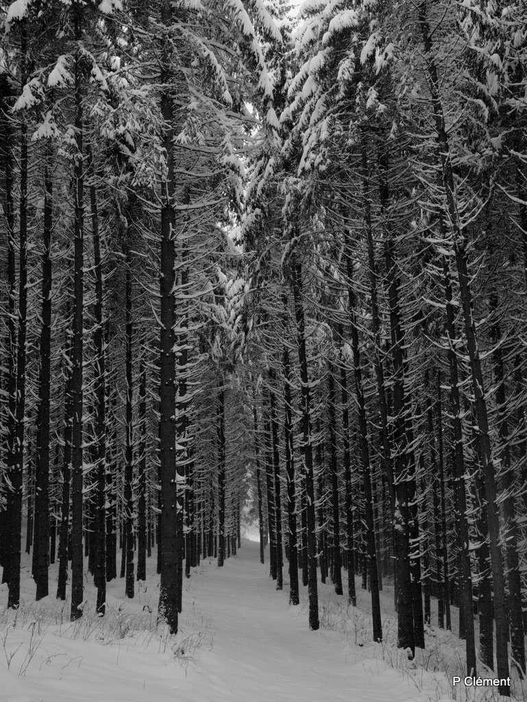 L'hiver Pc189211