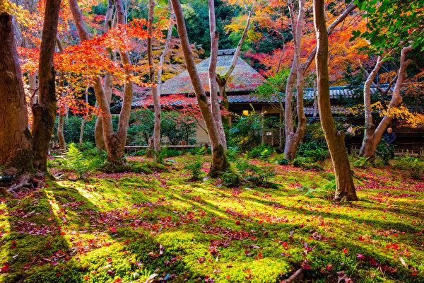 l'automne - Page 4 Japan_10