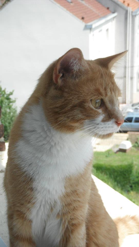 Guismo, 1 an, un amour de rouquin (en fa à Houplines) 55413310