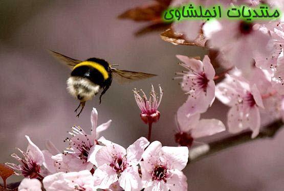(الاعتدال الربيعى) نبذه عن الإعتدال الربيعي - صور الاعتدال اربيعى spring equinox  13321912