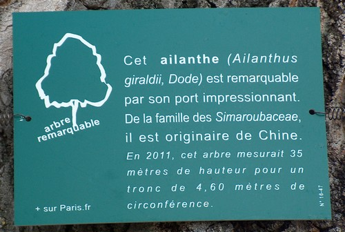 Visite des serres d'Auteuil Hpim2613