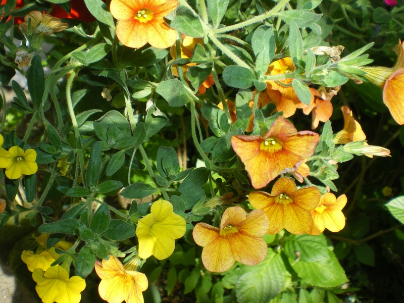 Toutes les fleurs de couleur jaune Imgp7510