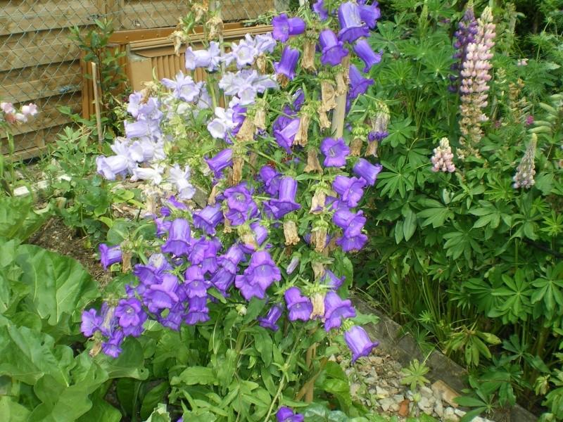 toutes les fleurs de couleur violette, bleue,  - Page 2 Imgp7649
