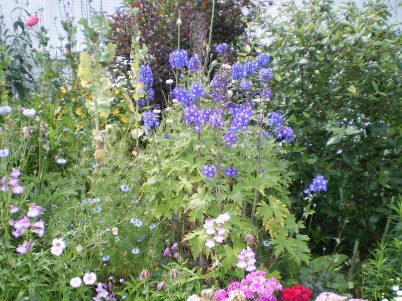 toutes les fleurs de couleur violette, bleue,  - Page 2 Imgp7653