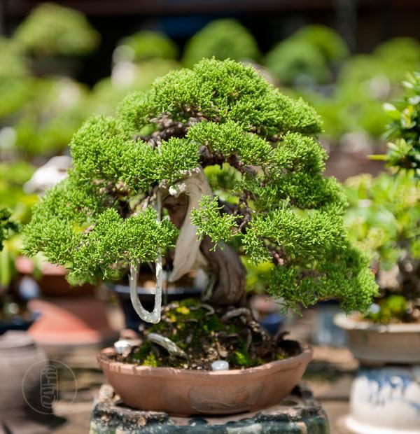Japan 2011 - Koju-en - Tomohiro Masumi Alb_7522