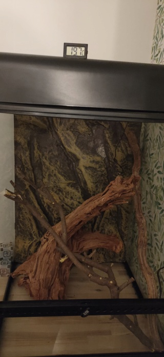 Projet Gecko à crête  Img20211