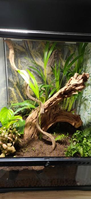 Projet Gecko à crête  Img20213
