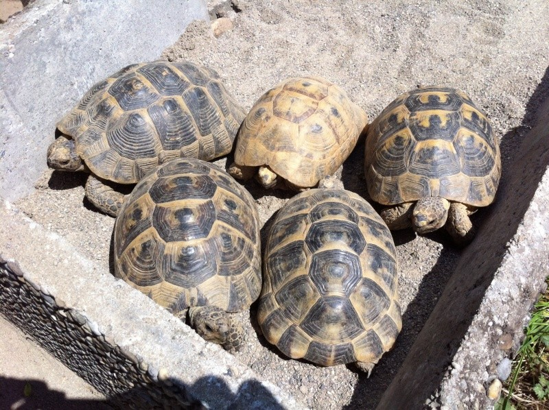 Nouvel enclos et mes 5 femelles! :) Photo_16