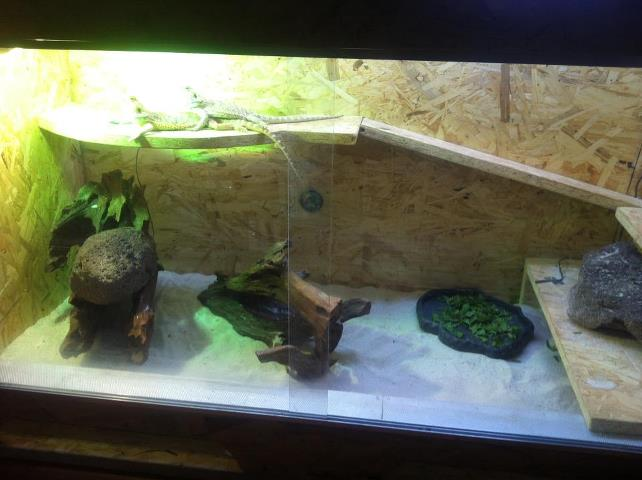 Terrarium et aquarium dans la méme piéce .... 55941210