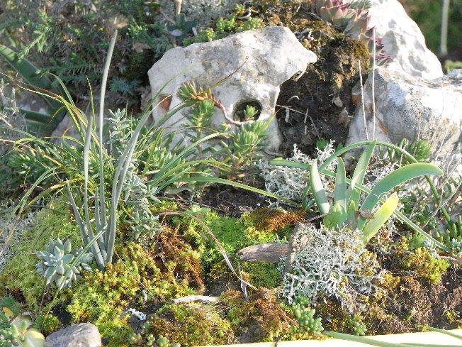 ma mini-garrigue ou autres réalisations à partir de plantes sauvages 12_dec11