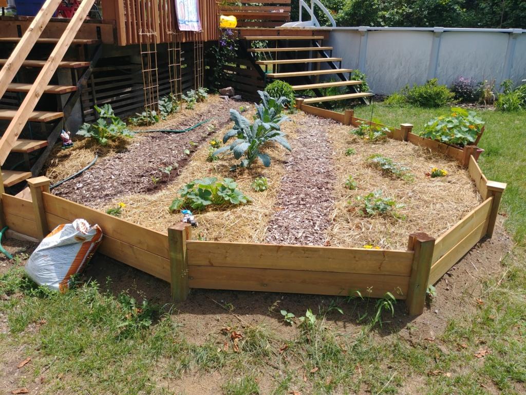 Mon jardin 2020 - Page 10 20200610
