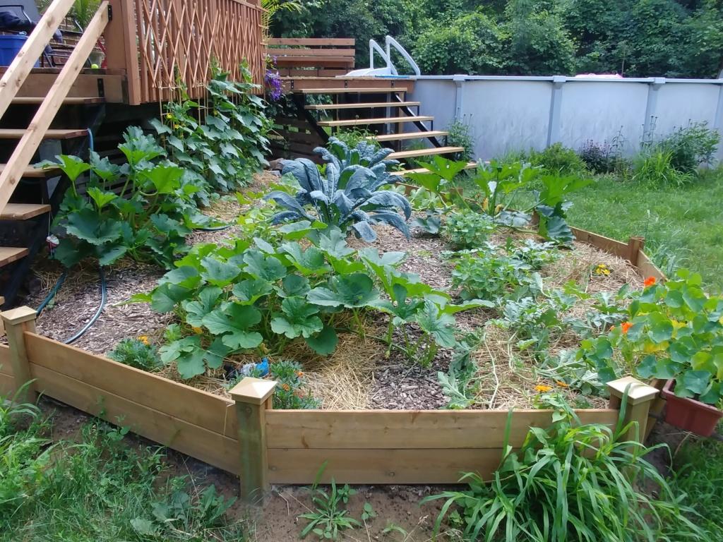 Mon jardin 2020 - Page 10 20200711