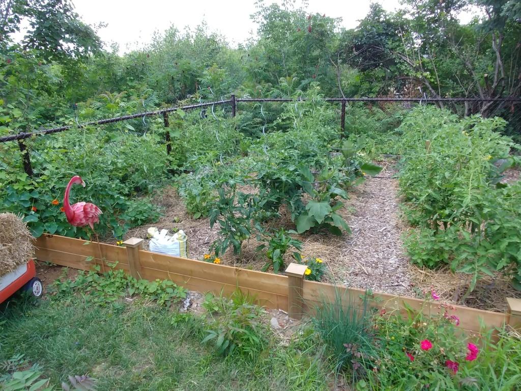 Mon jardin 2020 - Page 10 20200721