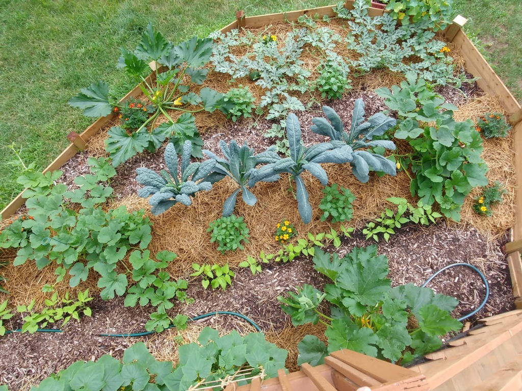 Mon jardin 2020 - Page 10 20200727
