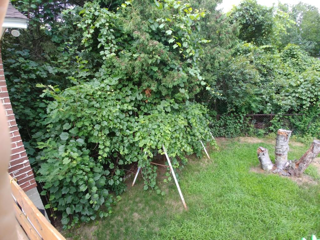 Mon jardin 2020 - Page 11 20200742