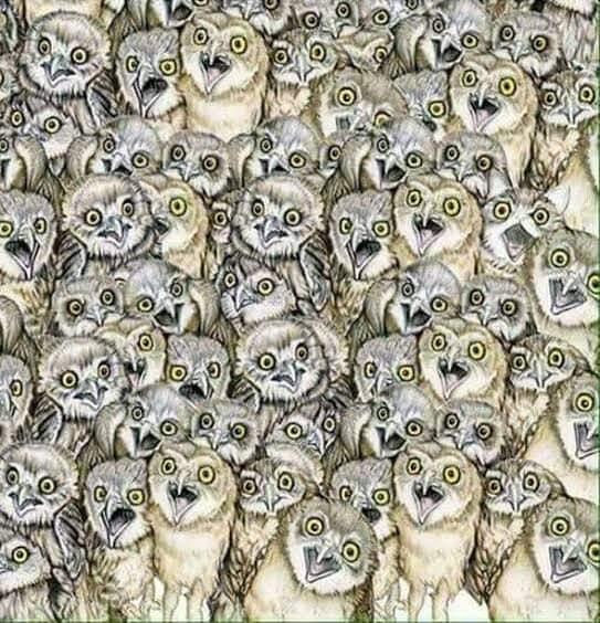 Jeu observation: Où est le chat ? Fb_im145